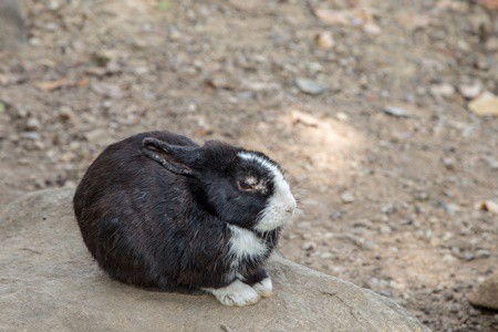 why is my rabbit losing fur?