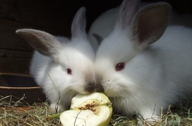 will rabbits stop eating when full?