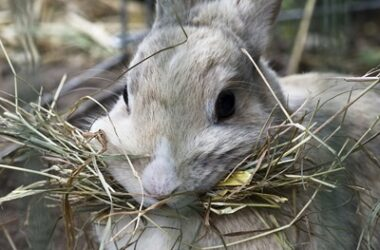 Where do rabbits get carbohydrates from?