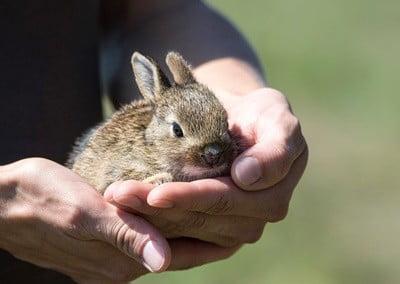 do rabbits lick for salt or affection?