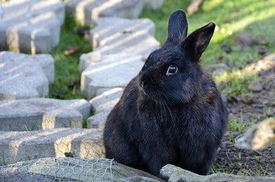 do rabbits recognize their name?