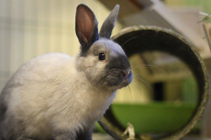 do rabbits remember their names?