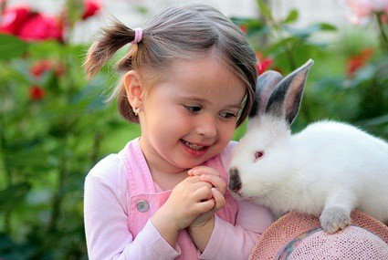 do rabbits understand human language?