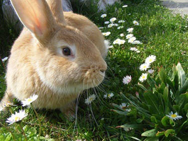 how fast do rabbits learn their names?