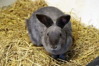 rabbit attracting mice