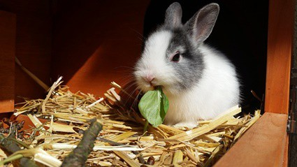 what causes rabbits to have diarrhea?