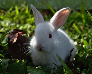 what food gives rabbits diarrhea?