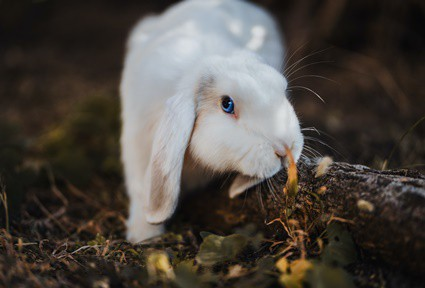 what kind of cat litter is safe for rabbits?