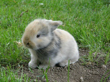 can baby rabbits play in the yard?