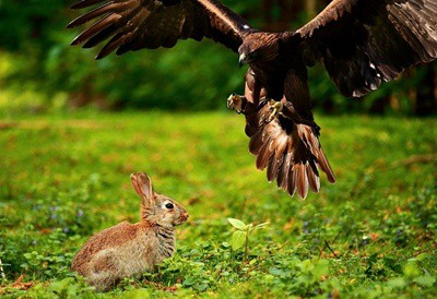 can birds and rabbits live together?