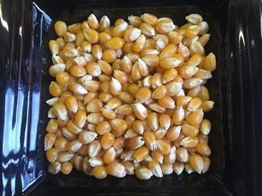 can rabbits eat popcorn kernels?