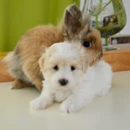 do dogs and rabbits get along?