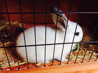 frozen water bottle in rabbit cage