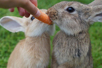 how much attention do rabbits need?