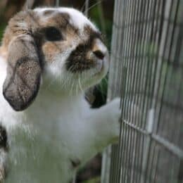 how to keep a rabbit's water from freezing