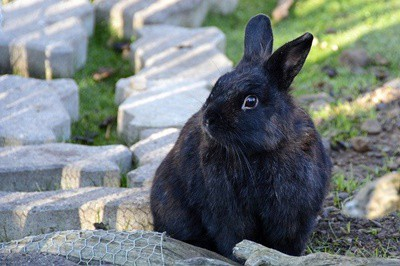 how to tell if your rabbit is getting old