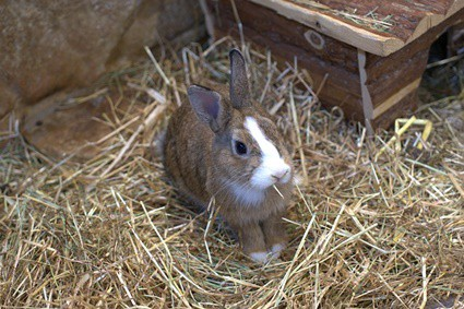 is cotton safe for rabbits?