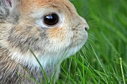 my rabbit is not friendly