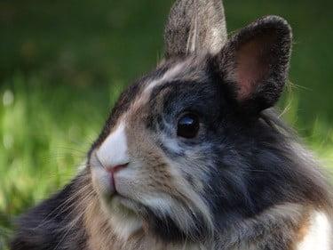 rabbit suddenly skittish