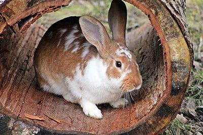 rabbit won't come near me
