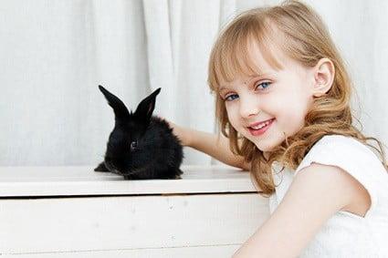 rabbits social needs
