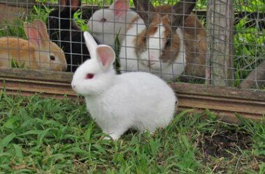 what does rabbit poop look like?