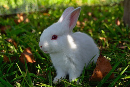 when can baby rabbits go outside in a run?