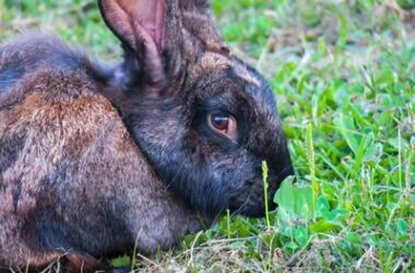 why are rabbits so fearful?