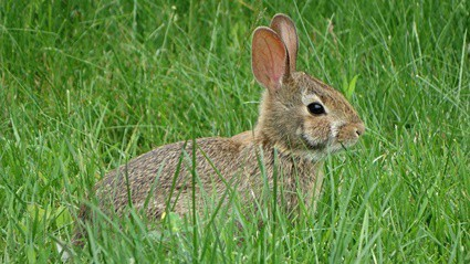 why do rabbits freeze in fear?