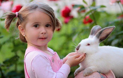 why won't my rabbit come to me?