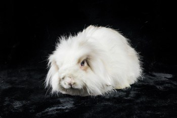 American Fuzzy Lop Personality