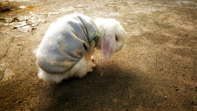 caring for senior rabbits