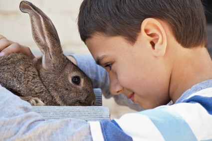 do rabbits like their nose rubbed?