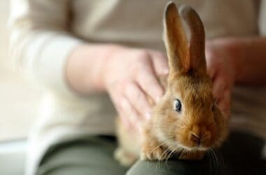is it good to pet a rabbit?