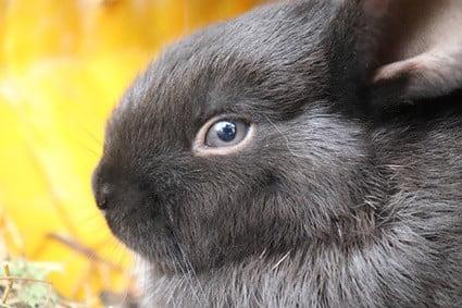 rabbit broken back recovery