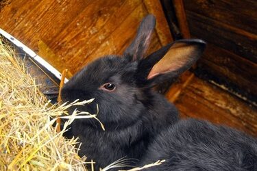 spinal injury in rabbits