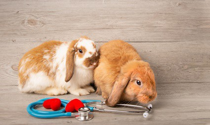 what to do if your rabbit has a seizure