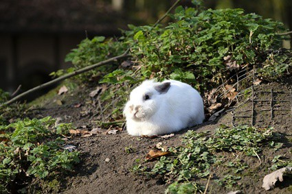 why does my rabbit keep hiding?