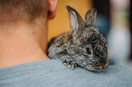 is it illegal to keep a wild baby rabbit?
