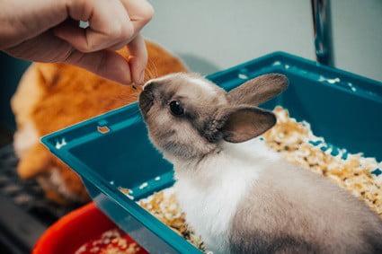 tetanus symptoms in rabbits