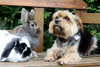 what can I do to stop my dog from eating rabbit poop?