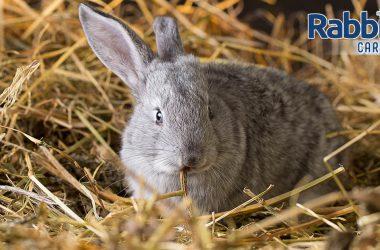 Rabbits and Hay