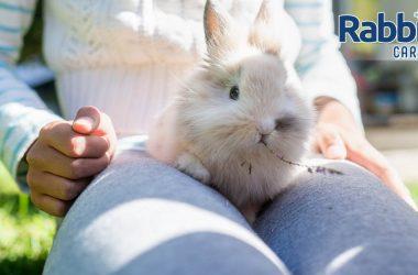 Teach bunny to jump on your lap