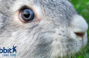 Rabbit wet nose guide