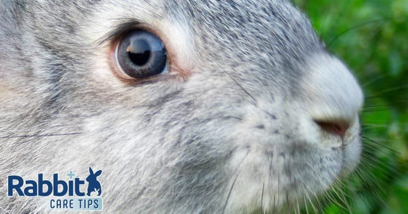 Rabbit wet nose guide