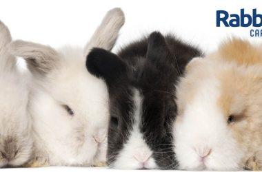 Sleeping rabbits