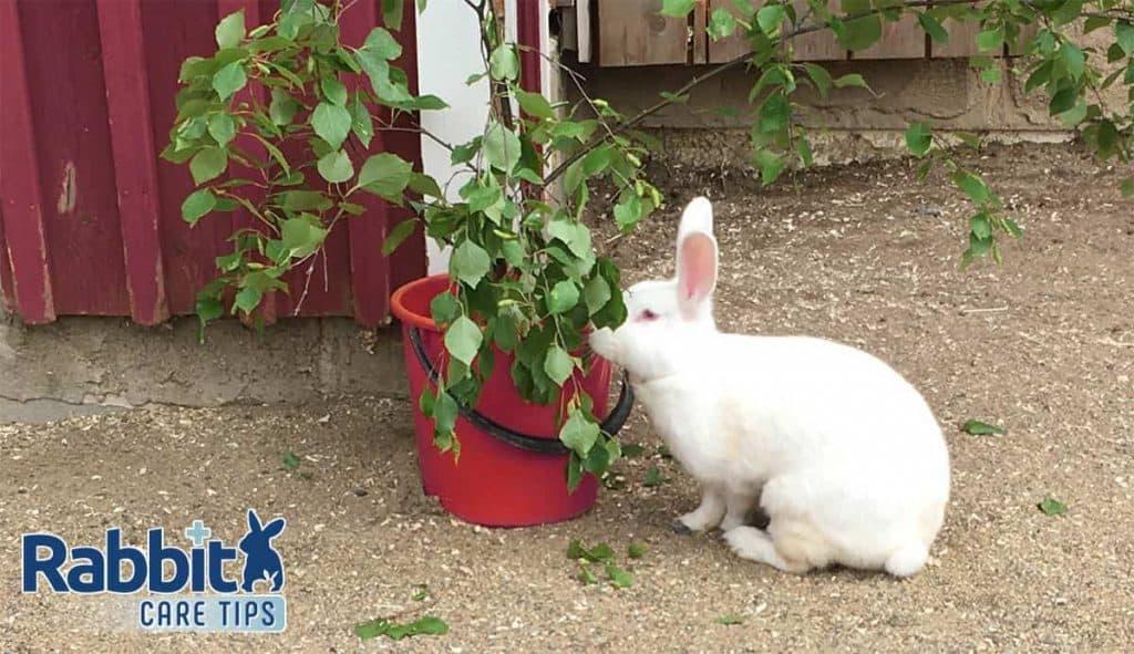 My rabbit Snowy